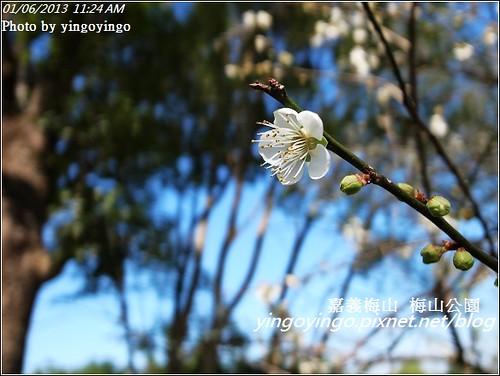 嘉義梅山_梅山公園20130106_R0071437