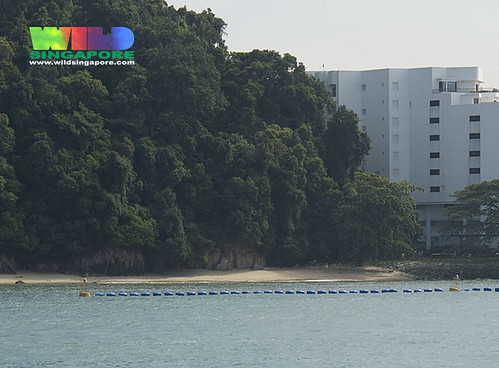 Floating security barrier in front of Sentosa's natural shores