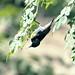 Bird by •Saif•