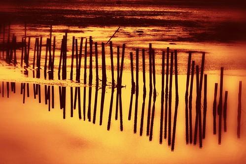 water manipulated reflections blackwaternationalwildliferefuge