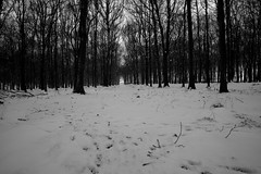 Dockey Wood in the snow