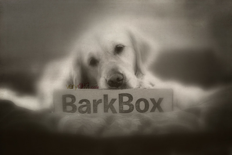What's A BarkBox?