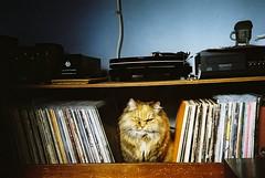 [フリー画像素材] 動物 (哺乳類), 猫・ネコ ID:201301301600