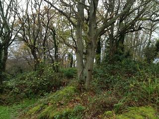 Sussex Oak land