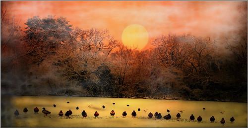 sunset tree birds sunrise southampton treebranches bassett southamptonmunicipalgolfcourse southamptonmunicipalgolfcourseandbowlersrestaurant southamptoncitygolfcourse