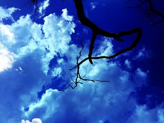 Branch with Sky