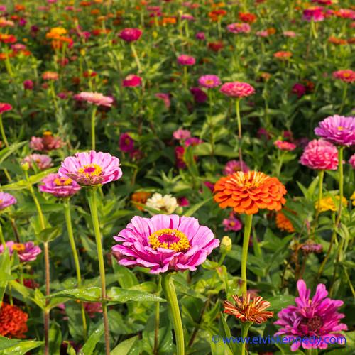 100 Days of Summer #97 - Wild Flowers