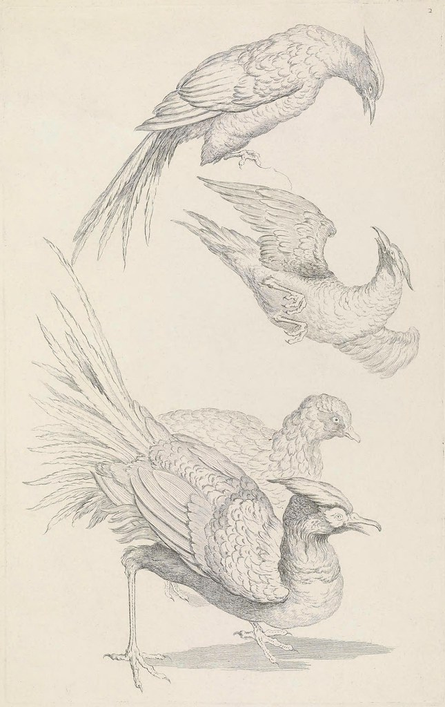 G Huquier engravings of birds of China