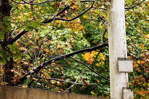 Fall, finally! (72)