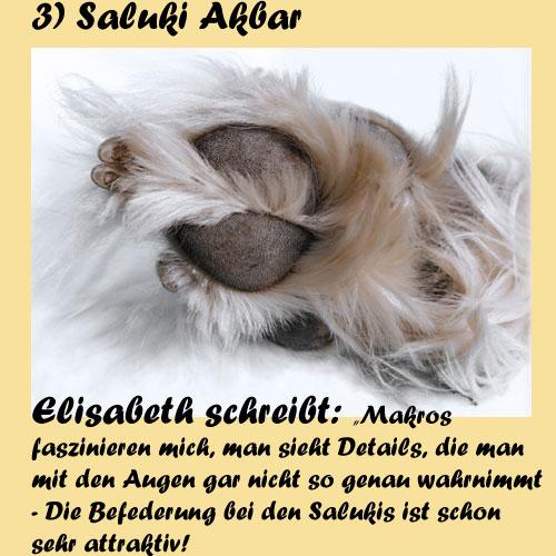 3-Saluki-Akbar