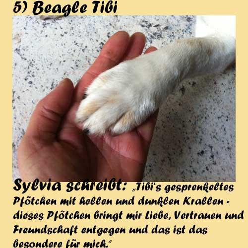 5-Beagle-Tibi