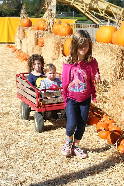 10-13-12 30 pumpkin patch