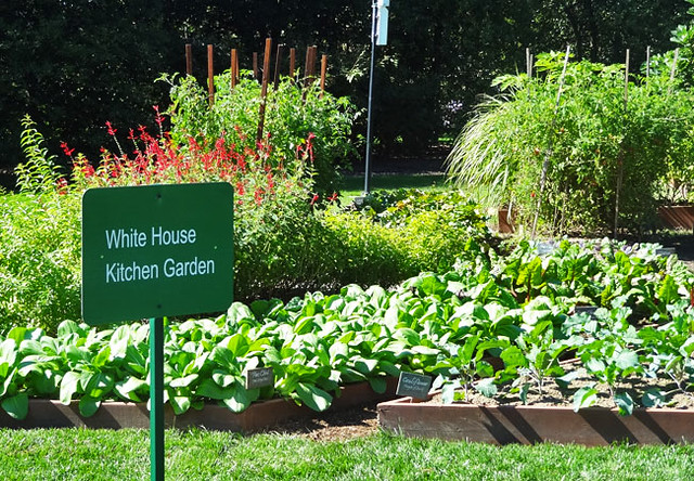 white-house-kitchen-garden