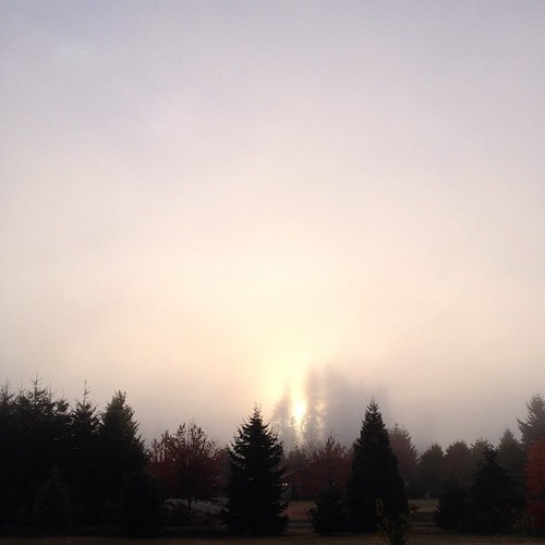 Sunshine and trees, fog and thirty-seven degrees. #nofilter