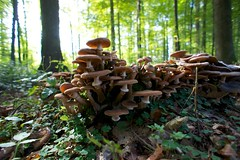 Autumn, forest and mushrooms 14