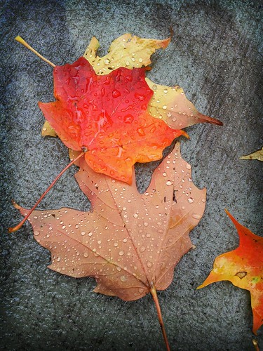 Fall leaves with rain by crisscrossgirl