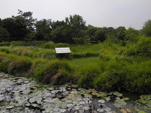 園區沒有地址,沒有人寫信給水雉。