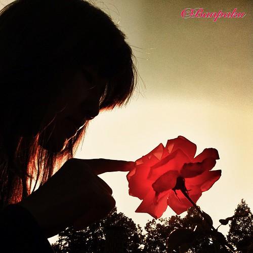 ©Banpaku 自宅近所にあるバラ公園というところを休日の夕方に散策。 やっぱり写真は逆光や! と言いたくなる渾身のショットです。 それにしてもiPhoneのカメラやっぱりスゲえぞ^_−☆ 因みにモデルはカミさん(^◇^;) iphoneで撮影。 #japan #hyogo #itami #rose #rosepark #iphone #iphonephoto #beautiful #fantastic #amazing #wonderful #webstagram #photooftheday #ig