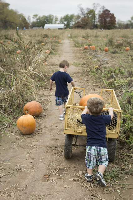 pumpkinpatch_25