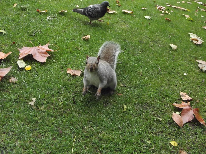A squirrel. Yay.