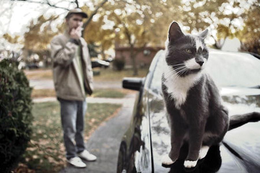 T & cat