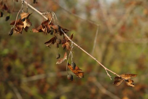 autumn nature moldova moldavia