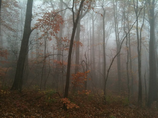 very foggy fall color