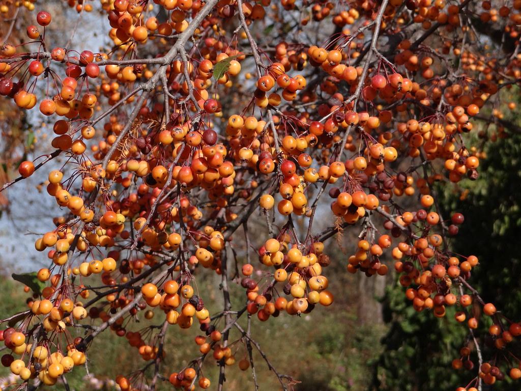 Powell Gardens' Blog: November 2012