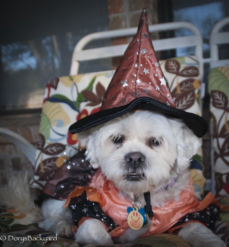20121031-Halloween-2