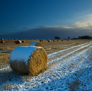 Icing sugar haybales in October 4 086