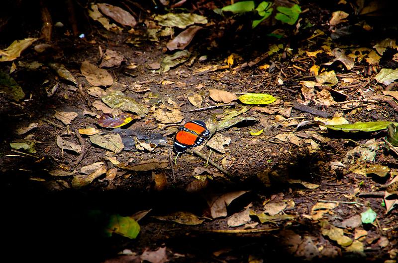lone butterfly