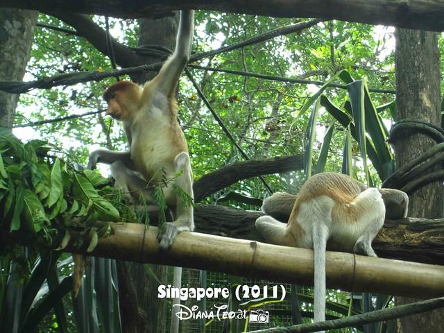 Day 3 Singapore - Zoo Singapore 04-1
