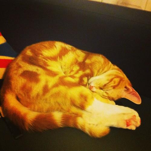 Sleepy Salami