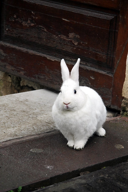 Lovely white rabbit in Istanbul, Turkey イスタンブールの白ウサギ