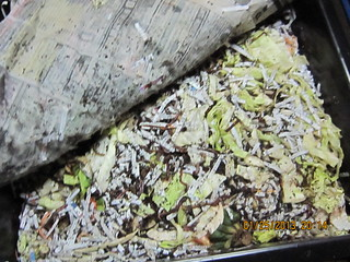 So what does a tray of composting materials and worms look like?