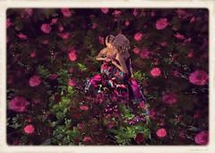 Our world full of roses