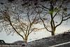 Stretford Trees.jpg