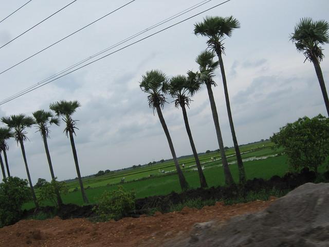 Palm trees, Canon POWERSHOT A480