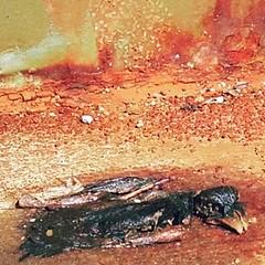 #bird #justgoshoot #red #dead #beautiful #art #deadart #morbid #rust