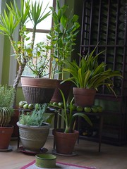 houseplants photo