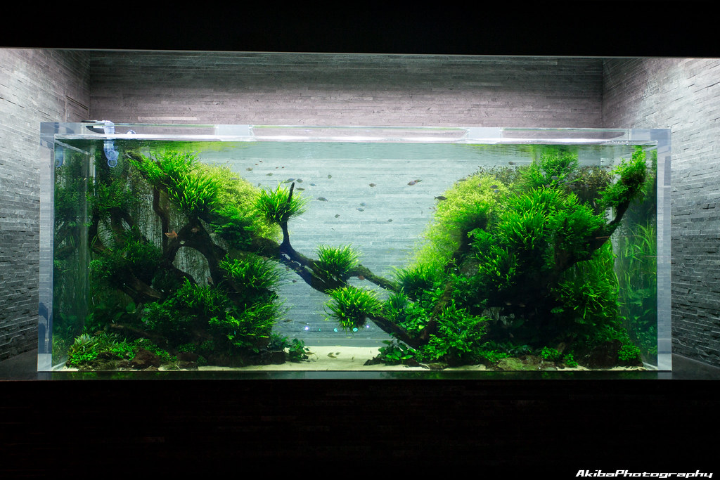 sumida-aquarium#3