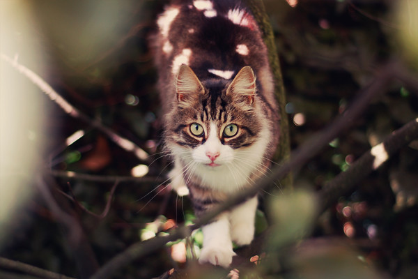 Wardrobeblock : Grey white fluffy cat cat pink tongue autumn leaves bokeh tree