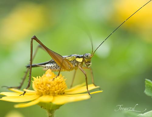 Crickets..