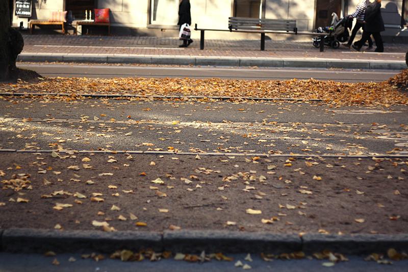 sista hösten med gula löv i vasa SÖRJER