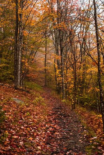 A Walk Through Fall
