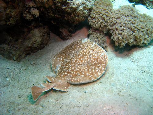 Torpille panthère de Plongez-Pépère, sur Flickr
