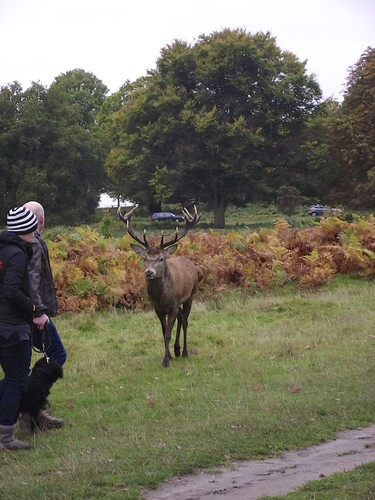 Too close encounter - Richmond Park
