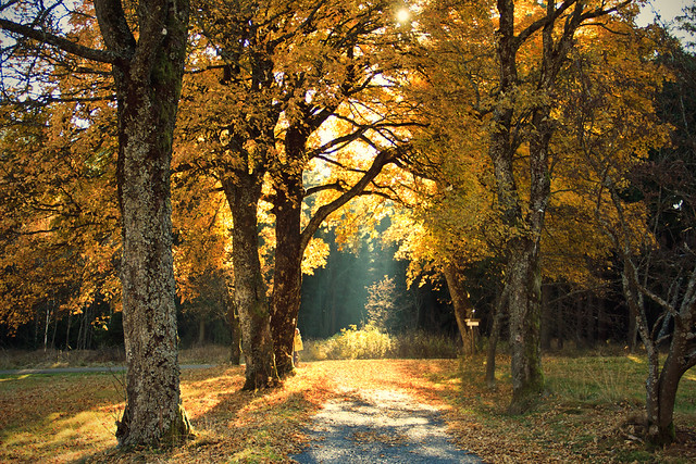#302 Golden Oktober