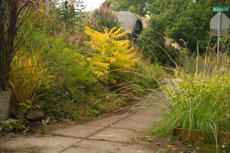sumac foliage  2369