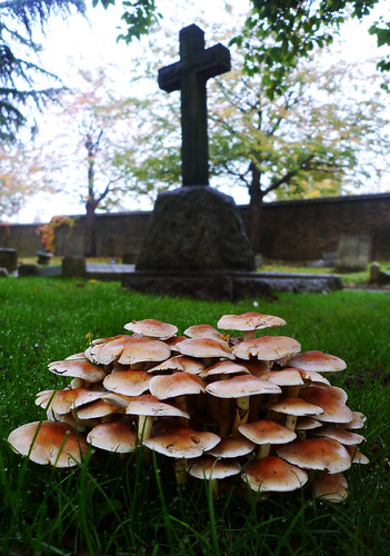 mushrooms and cross